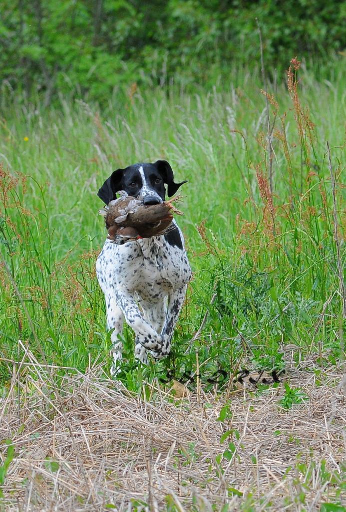 croquette chien de chasse croquette chien le pere francois chasse courant croquettes pour. Black Bedroom Furniture Sets. Home Design Ideas